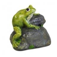 Croak Alert - Frog on Rock (A)