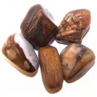 Petrified Wood Large Tumble Stones